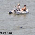 Sea Lion Steals Fish Along Sacramento River