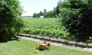 bogle vineyard and picnic area